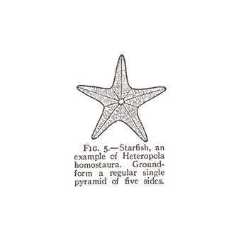 FIG. 5.—Starfish, an example of Heteropola homostaura. Groundform a regular single pyramid of five sides.