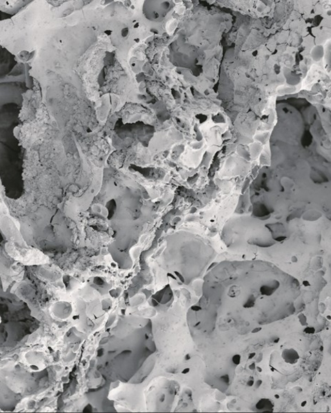 Scanning Electron Microscope (SEM) image of a bread-like product from Shubayqa 1