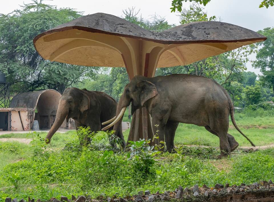 Habib Rahman, early 1970s, Delhi Zoo. Elephant umbrella