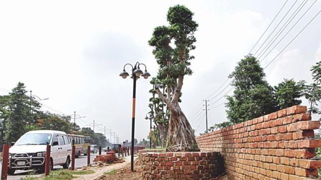 The imported bonsais planted on the pavement of Airport Road in the capital. The photo was taken recently.