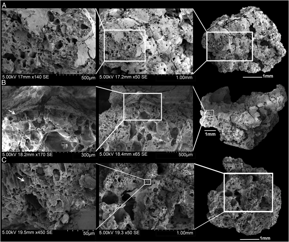 Fig. 3.  Scanning electron microscope images of bread-like remains from Shubayqa 1.