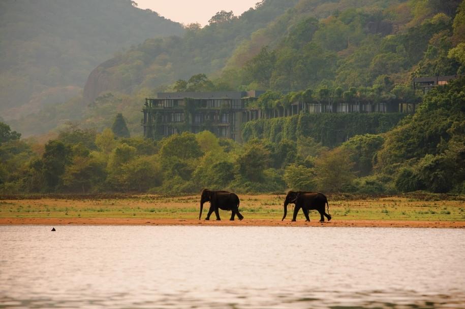 Elephants make their way across the Kandalama resort's lush real estate.