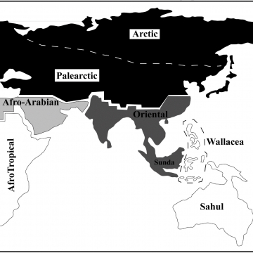 Figure 1: Biogeographic realms of Asia during MIS 3 and MIS 4.