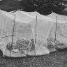 A    mosquito-net for campers, IIT Bombay, 1986